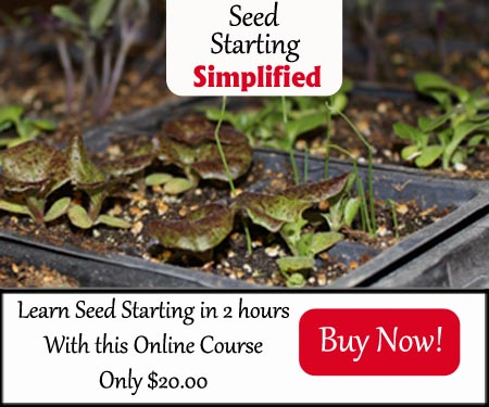 Seed Starting Banner $20 300x250