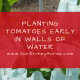 Planting Tomatoes Early in Walls of Water FB