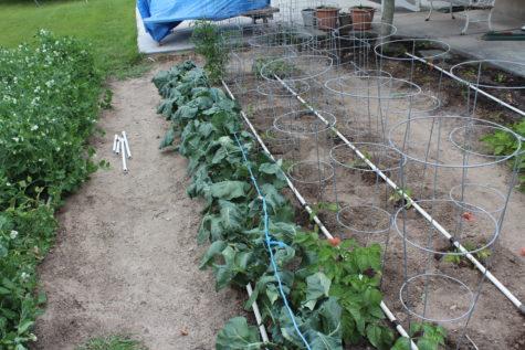 Planning your garden 2