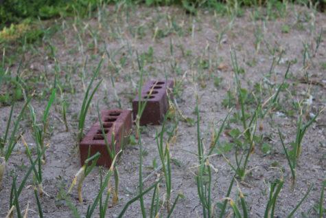 April Planting Guide 3