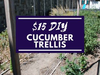 $15-DIY-Cucumber-Trellis Facebook