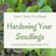 hardening off your transplants