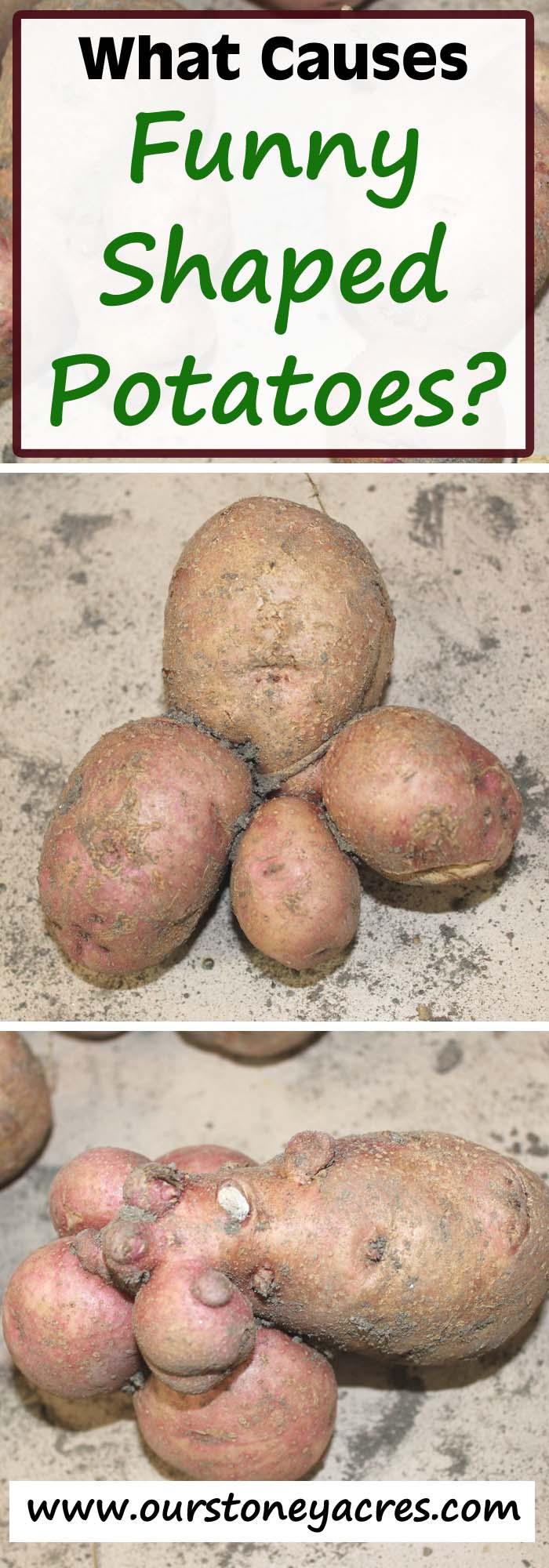 Funny Shaped Potatoes
