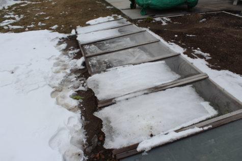 Planning a winter garden #4