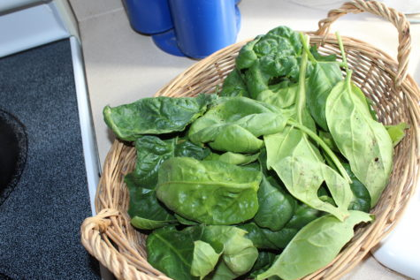 Over Wintering Spinach