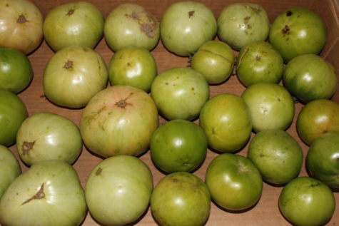 How to Ripen Green Tomatoes 3