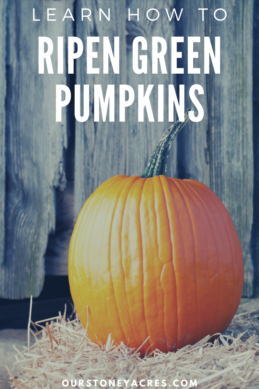 Ripen Green Pumpkins