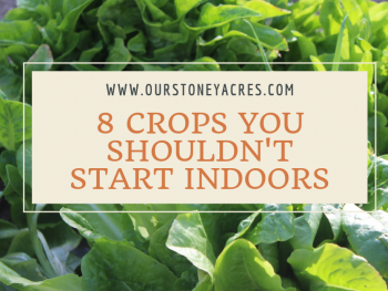 8 Crops you Shouldn't Start Indoors feature
