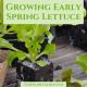 Growing Early Season Salad Greens