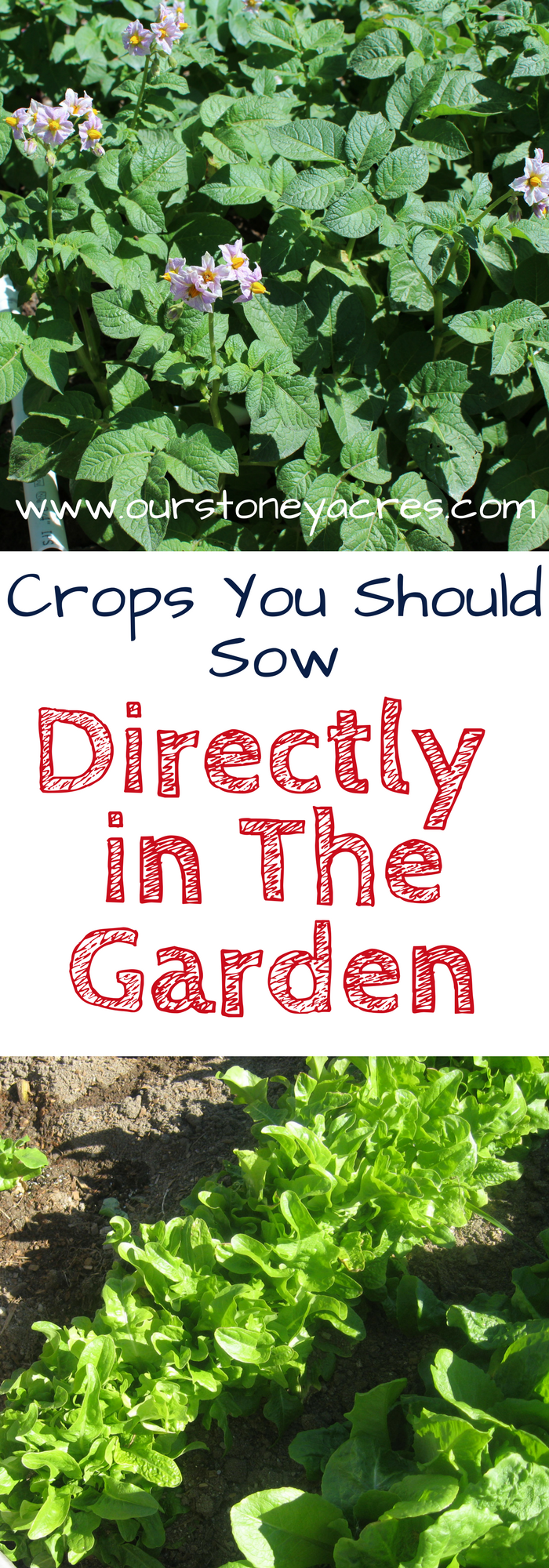 Crops you shouldn't bother starting indoors