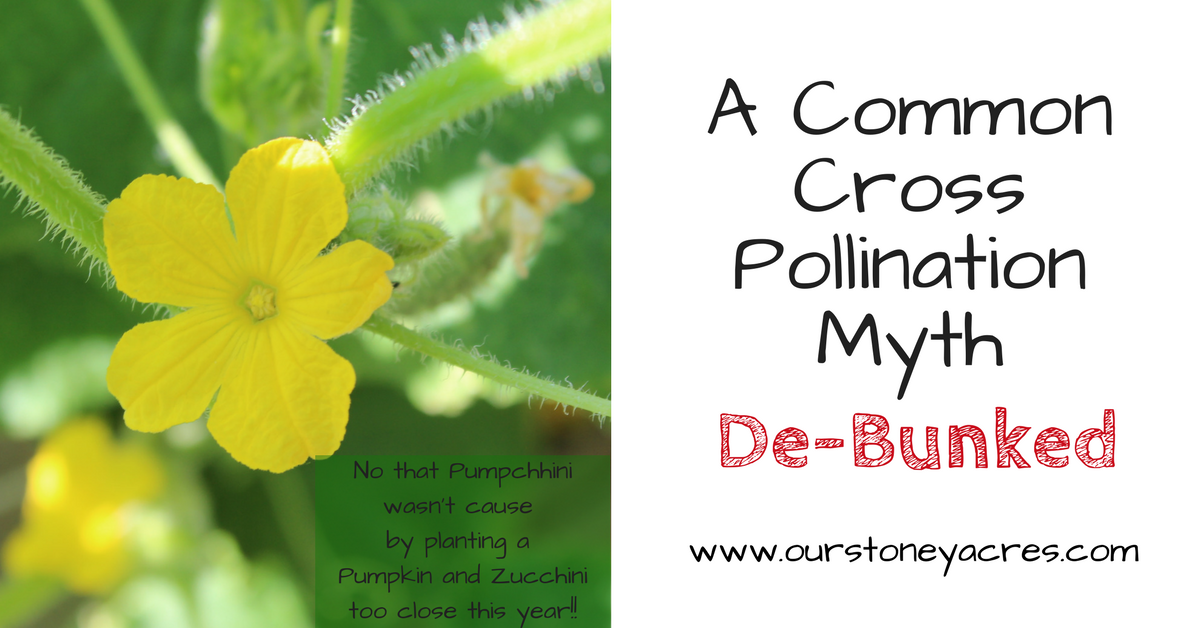 Cross Pollination Fb Gardening Myths And Misconceptions By