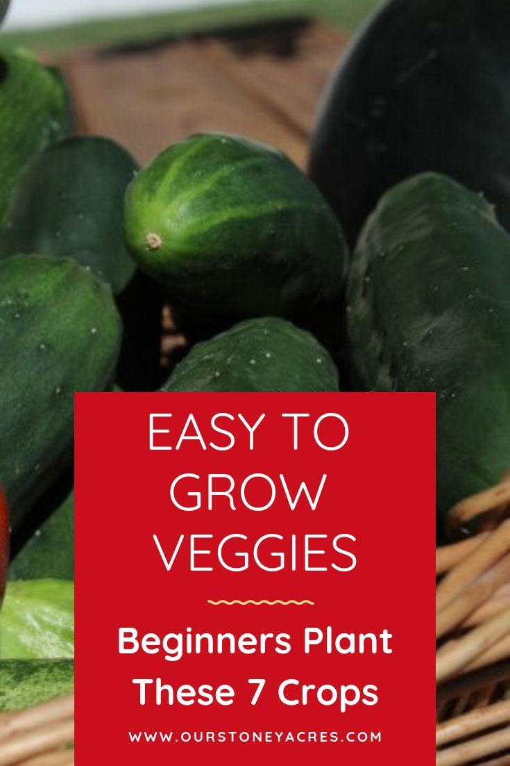 7 Easy to Grow Veggies