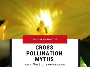 Cross Pollination Myths