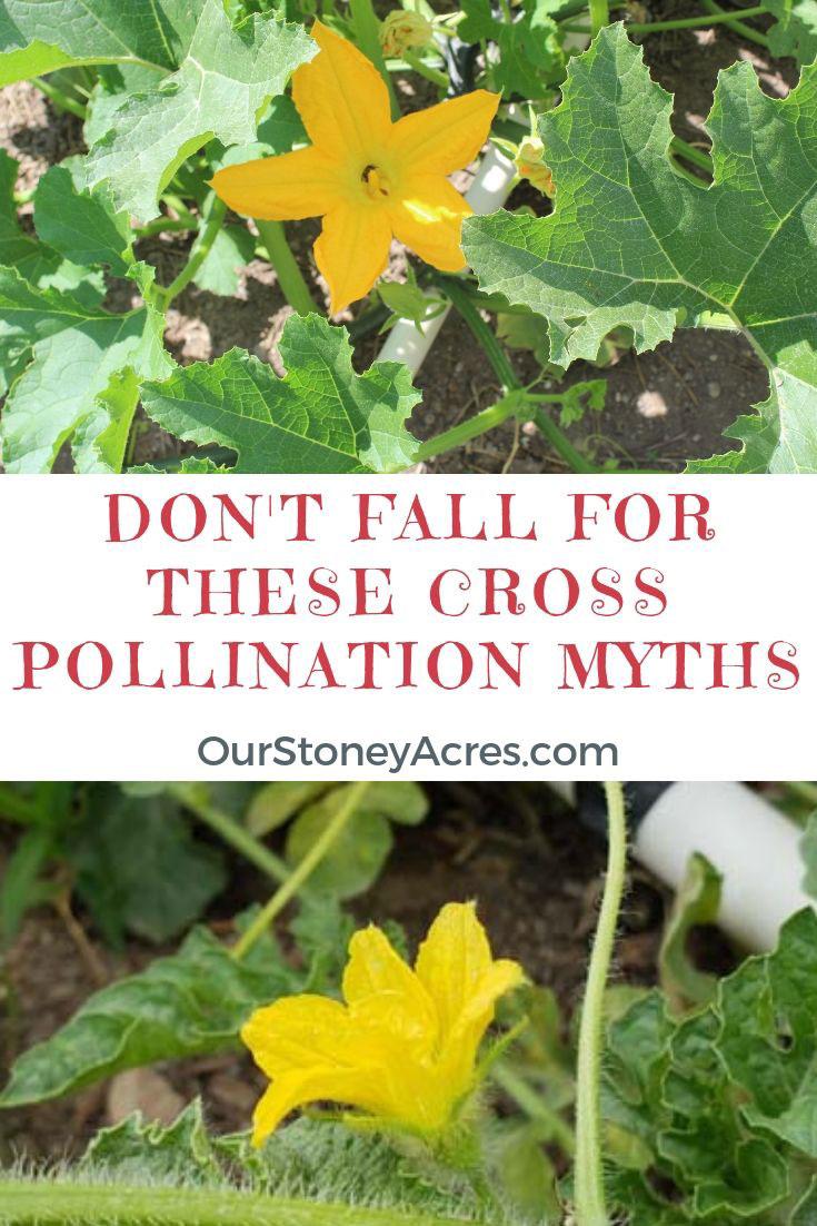 Cross Pollination Myths to avoid