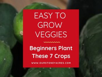 Easy to Grow Veggies