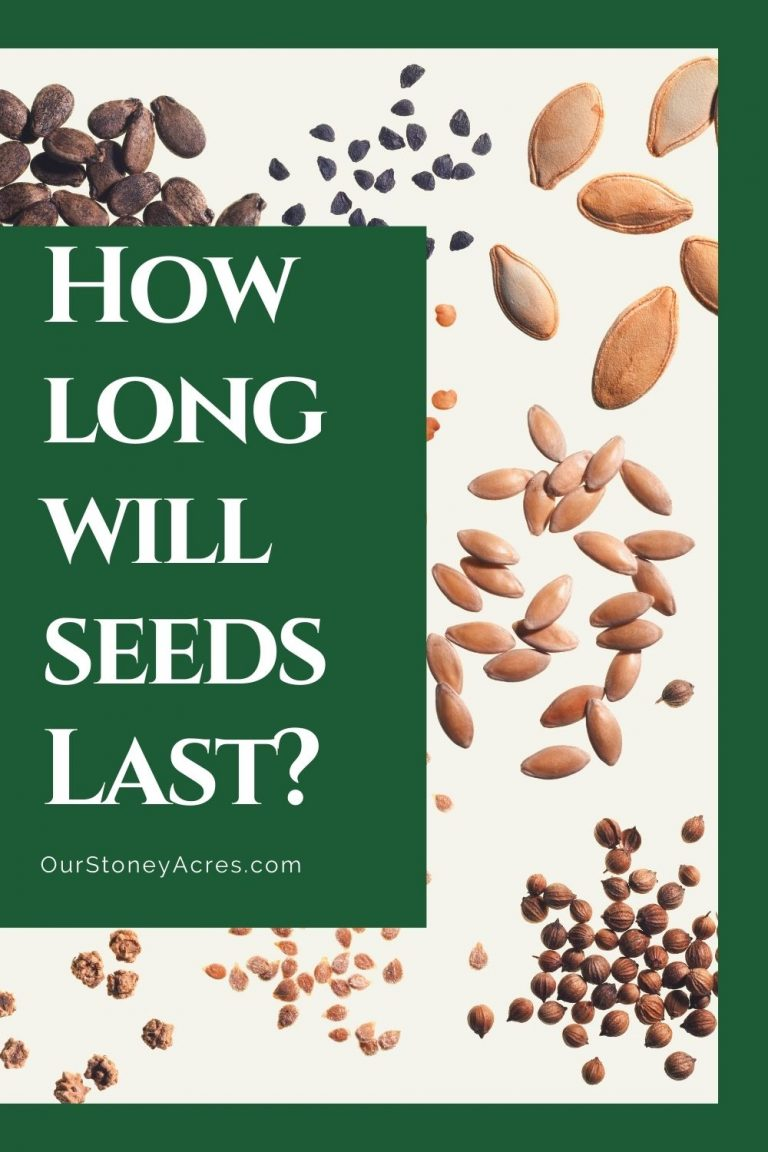 How long do seeds last in storage? - Our Stoney Acres