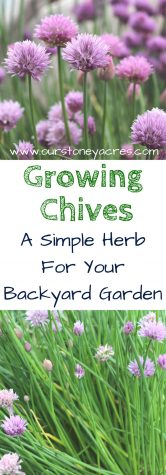 Growing Chives - Pinterest #1
