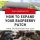 Transplanting Raspberries