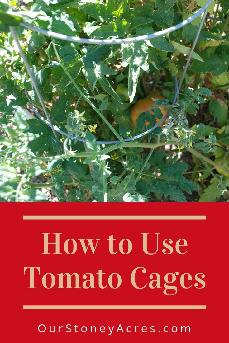 Using Tomato Cages
