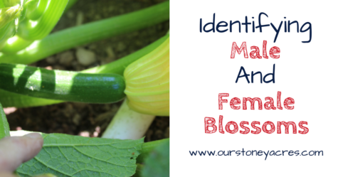 Male and Female Blossoms FB