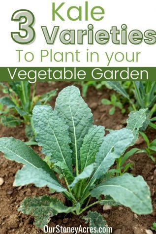 3 types of Kale Varieties