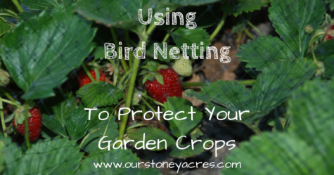 Using Bird Netting - FB