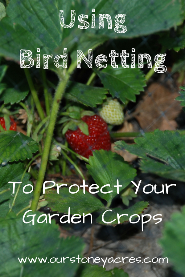 Using Bird Netting