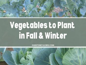 Vegetables to plant in Fall and Winter