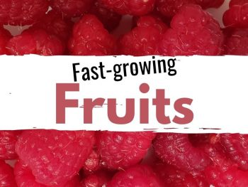Fast Growing Fruits