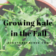 Grow Kale in the fall