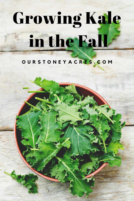 Grow Kale in the fall
