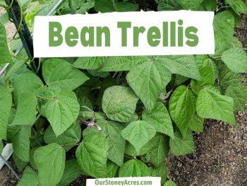 Bean Trellis