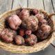 Volunteer Potatoes 3