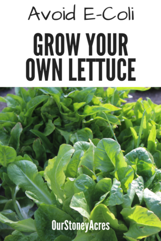 Grow Your Own Lettuce - 10