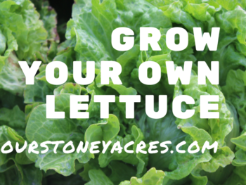 Grow Your Own Lettuce - FB