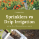 Sprinkler Vs Drip Irrigation
