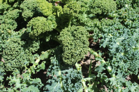 7 Vegetables that can Survive Freezing