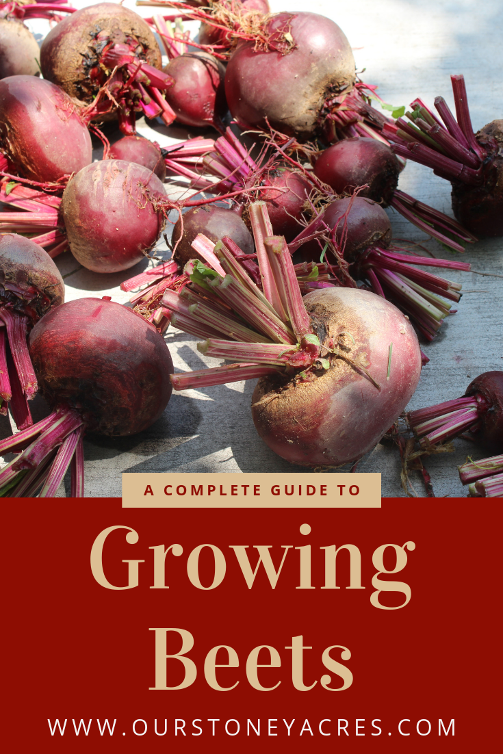 A Complete Guide To Growing Beets