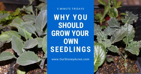 Grow Your Own Seedlings facebook