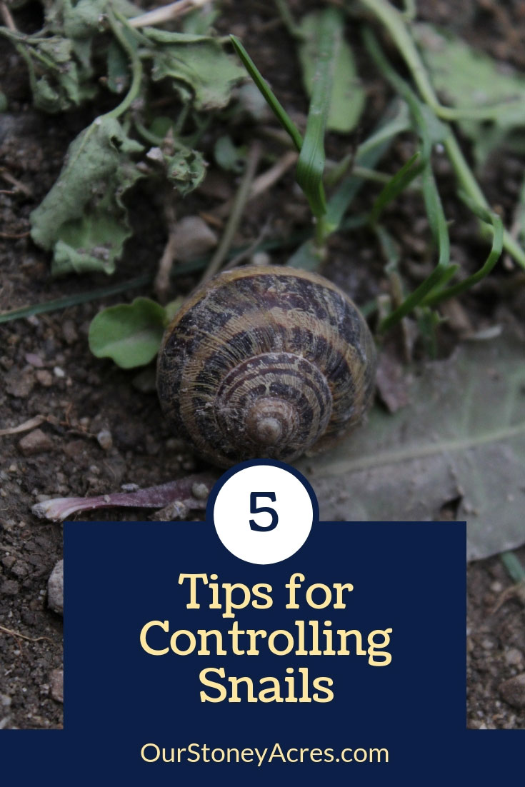 5 Tips for Controlling Snails in the Garden