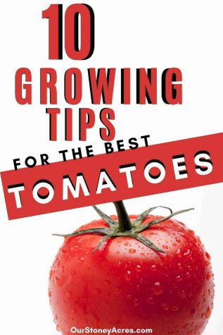 _10 Growing tips for Tomatoes