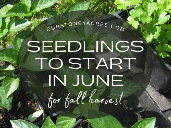 Seedlings to Start in June for Fall Harvest