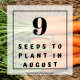 crops you can plant in August