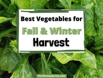 Vegetables to grow in Fall