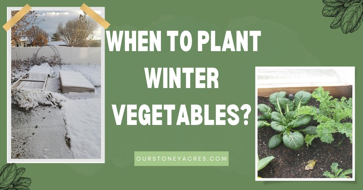 When to Plant Fall & Winter Vegetables