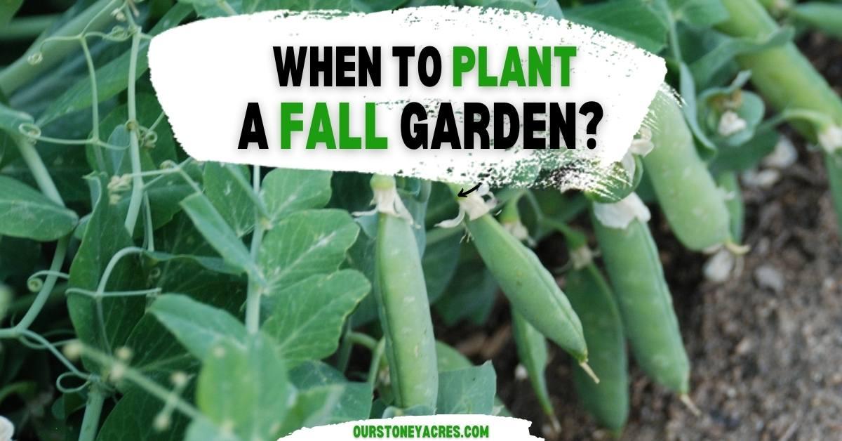When to Plant a Fall Garden