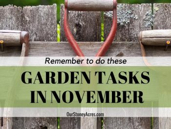 Garden Tasks in November