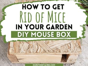 How To Get Rid of Mice in your Garden