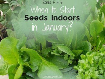 When to Start Seeds indoors zones 5 & 6