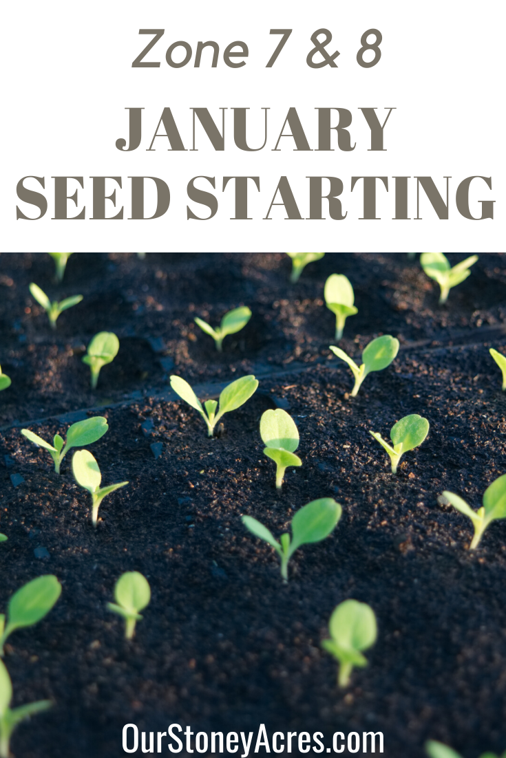 What to Plant in January